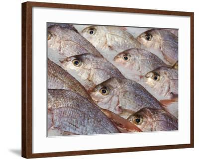Fresh Seafood Sits on Ice Ready at Sydney's Fish Market at Pyrmont, Australia-Andrew Watson-Framed Photographic Print
