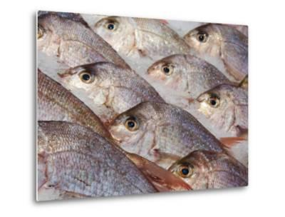 Fresh Seafood Sits on Ice Ready at Sydney's Fish Market at Pyrmont, Australia-Andrew Watson-Metal Print