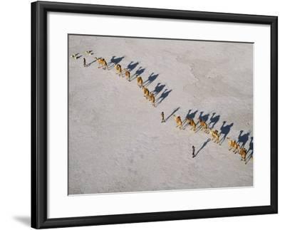 Afar Camel Caravan Crosses the Salt Flats of Lake Assal, Djibouti, as Shadows Lengthen in the Late -Nigel Pavitt-Framed Photographic Print