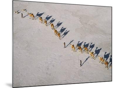 Afar Camel Caravan Crosses the Salt Flats of Lake Assal, Djibouti, as Shadows Lengthen in the Late -Nigel Pavitt-Mounted Photographic Print