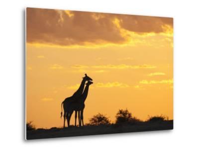 Giraffes, Silhouetted at Sunset, Etosha National Park, Namibia, Africa-Ann & Steve Toon-Metal Print