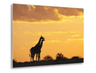 Giraffes, Silhouetted at Sunset, Etosha National Park, Namibia, Africa-Ann & Steve Toon-Metal Print