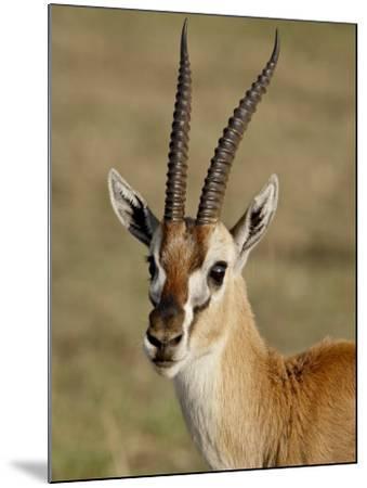 Male Thomsons Gazelle, Masai Mara National Reserve-James Hager-Mounted Photographic Print