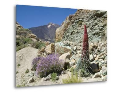 Red Vipers Bugloss, with Pico De Teide in Background, Las Canadas, Tenerife-Tony Waltham-Metal Print