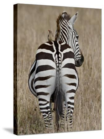 Red-Billed Oxpecker on a Grants Zebra-James Hager-Stretched Canvas Print