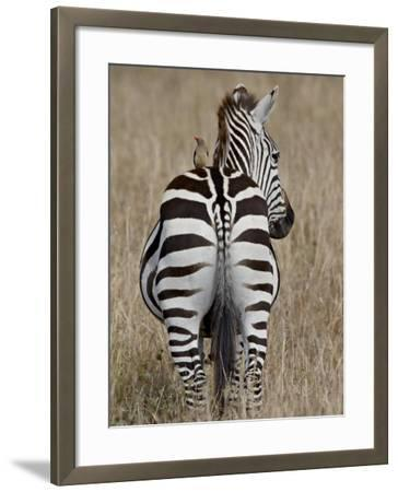 Red-Billed Oxpecker on a Grants Zebra-James Hager-Framed Photographic Print