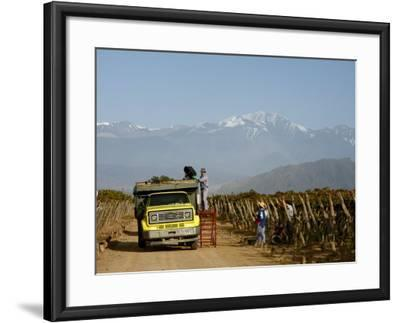 Grape Harvest at a Vineyard in Lujan De Cuyo with the Andes Mountains in the Background, Mendoza-Yadid Levy-Framed Photographic Print