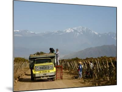 Grape Harvest at a Vineyard in Lujan De Cuyo with the Andes Mountains in the Background, Mendoza-Yadid Levy-Mounted Photographic Print