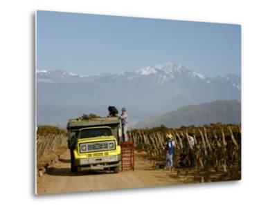 Grape Harvest at a Vineyard in Lujan De Cuyo with the Andes Mountains in the Background, Mendoza-Yadid Levy-Metal Print