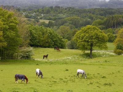 Horses in Field Near Vejle, Jutland, Denmark, Scandinavia, Europe-Yadid Levy-Framed Photographic Print