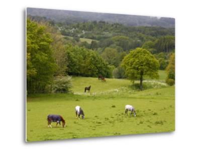 Horses in Field Near Vejle, Jutland, Denmark, Scandinavia, Europe-Yadid Levy-Metal Print
