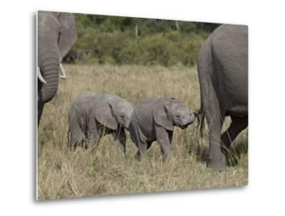 Two Young African Elephant, Masai Mara National Reserve-James Hager-Metal Print