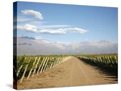 Vineyards and the Andes Mountains in Lujan De Cuyo, Mendoza, Argentina, South America-Yadid Levy-Stretched Canvas Print