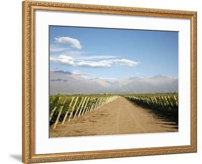 Vineyards and the Andes Mountains in Lujan De Cuyo, Mendoza, Argentina, South America-Yadid Levy-Framed Photographic Print