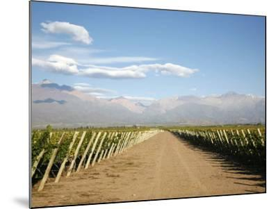 Vineyards and the Andes Mountains in Lujan De Cuyo, Mendoza, Argentina, South America-Yadid Levy-Mounted Photographic Print