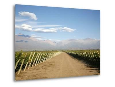 Vineyards and the Andes Mountains in Lujan De Cuyo, Mendoza, Argentina, South America-Yadid Levy-Metal Print