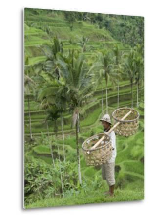 Rice Terraces Near Tegallalang Village, Bali, Indonesia, Southeast Asia, Asia-Richard Maschmeyer-Metal Print