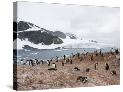 Cuverville Island, Antarctic Peninsula, Antarctica, Polar Regions-Robert Harding-Stretched Canvas Print