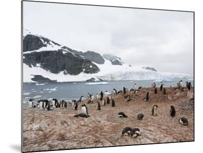 Cuverville Island, Antarctic Peninsula, Antarctica, Polar Regions-Robert Harding-Mounted Photographic Print