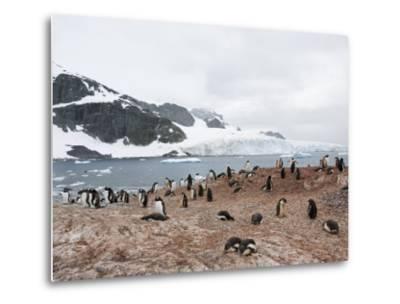 Cuverville Island, Antarctic Peninsula, Antarctica, Polar Regions-Robert Harding-Metal Print