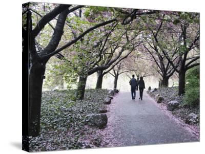 Spring Cherry Blossom, Brooklyn Botanical Garden, Brooklyn-Christian Kober-Stretched Canvas Print