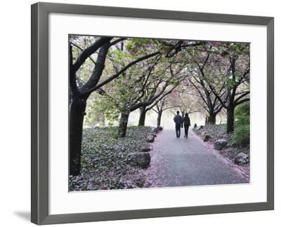 Spring Cherry Blossom, Brooklyn Botanical Garden, Brooklyn-Christian Kober-Framed Photographic Print