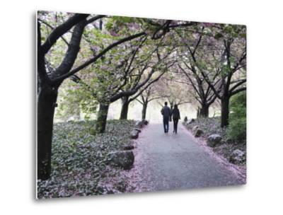 Spring Cherry Blossom, Brooklyn Botanical Garden, Brooklyn-Christian Kober-Metal Print