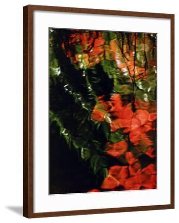 Reflections in the West Fork of Oak Creek, Sedona, Arizona, USA-Margaret L. Jackson-Framed Photographic Print