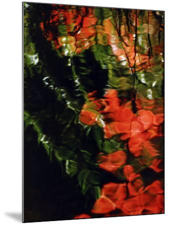 Reflections in the West Fork of Oak Creek, Sedona, Arizona, USA-Margaret L. Jackson-Mounted Photographic Print