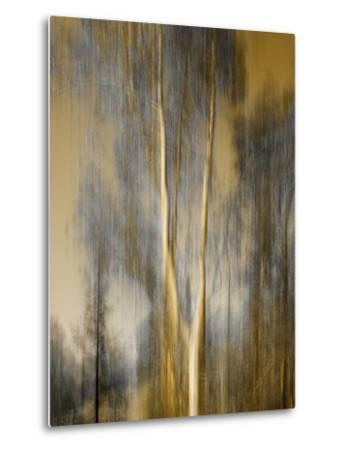 Composited Image of Trees-Diane Miller-Metal Print