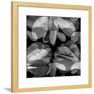 Floral Petals Upon Petals-Winfred Evers-Framed Photographic Print
