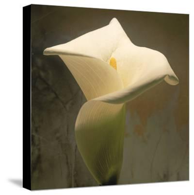 Calla Lily (Zantedeschia Aethiopica), Spring, Oregon, North America-Reynolds Trish-Stretched Canvas Print