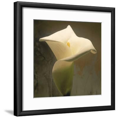 Calla Lily (Zantedeschia Aethiopica), Spring, Oregon, North America-Reynolds Trish-Framed Photographic Print