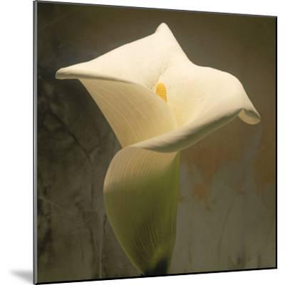 Calla Lily (Zantedeschia Aethiopica), Spring, Oregon, North America-Reynolds Trish-Mounted Photographic Print