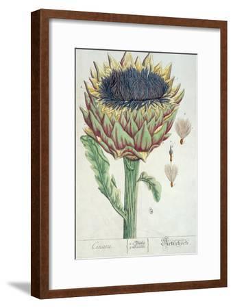 Artichoke, from 'Herbarium Blackwellianum', 1757-Elizabeth Blackwell-Framed Giclee Print