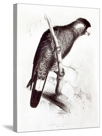 Calyptorhynchus Baudinii, or Baudin's Cockatoo, 1832-Edward Lear-Stretched Canvas Print