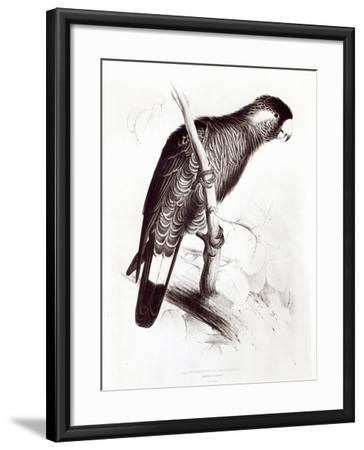 Calyptorhynchus Baudinii, or Baudin's Cockatoo, 1832-Edward Lear-Framed Giclee Print