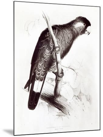 Calyptorhynchus Baudinii, or Baudin's Cockatoo, 1832-Edward Lear-Mounted Giclee Print