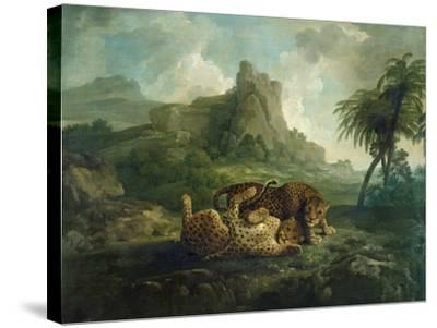 Leopards at Play, c.1763-8-George Stubbs-Stretched Canvas Print