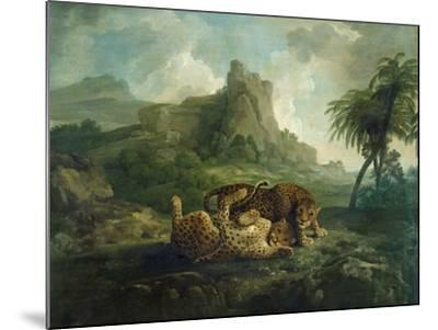 Leopards at Play, c.1763-8-George Stubbs-Mounted Giclee Print