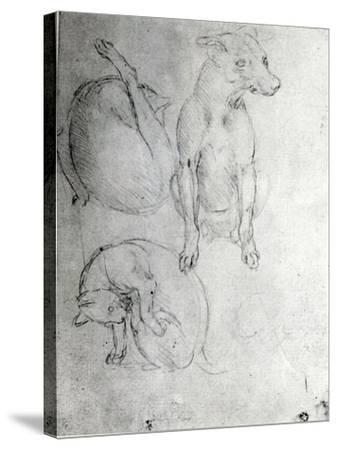 Study of a Dog and a Cat, c.1480-Leonardo da Vinci-Stretched Canvas Print
