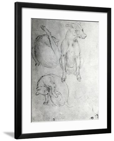 Study of a Dog and a Cat, c.1480-Leonardo da Vinci-Framed Giclee Print