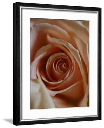 Close-Up of Rose-Elise Donoghue-Framed Photographic Print