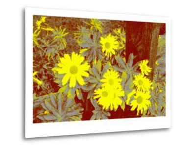 Yellow Daisies-Rich LaPenna-Metal Print