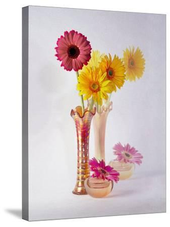 Gerbera Daisies in Antique Vase-Diane Miller-Stretched Canvas Print