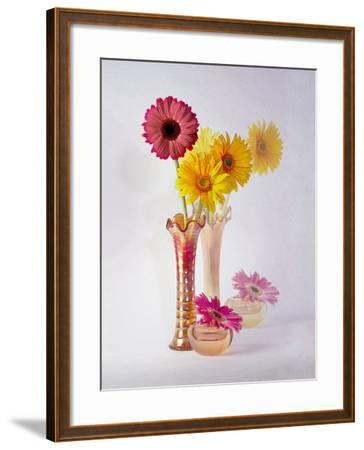 Gerbera Daisies in Antique Vase-Diane Miller-Framed Photographic Print