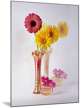 Gerbera Daisies in Antique Vase-Diane Miller-Mounted Photographic Print