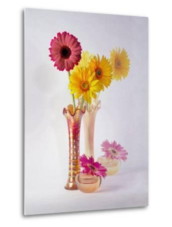 Gerbera Daisies in Antique Vase-Diane Miller-Metal Print