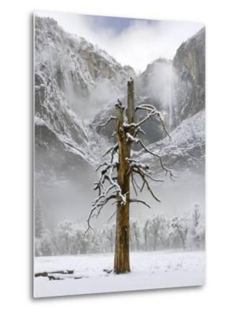 Yosemite Falls, Yosemite National Park, California-Diane Miller-Metal Print
