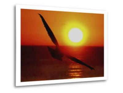 Bird Gliding into Setting Sun-Rich LaPenna-Metal Print